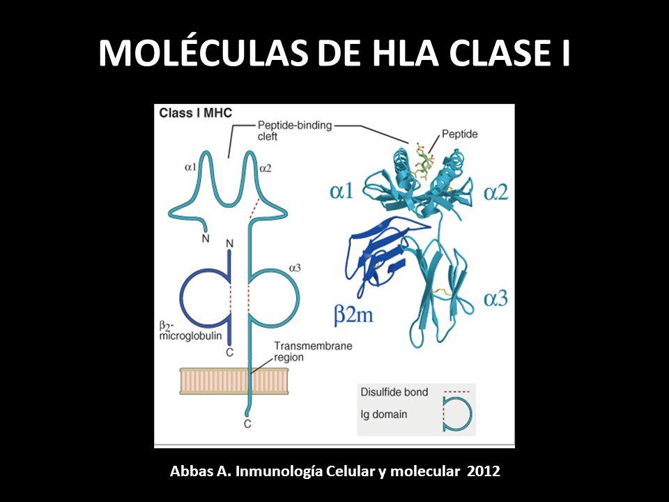 MOLÉCULAS DE HLA CLASE I