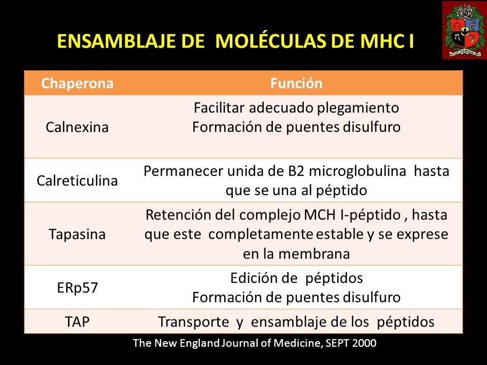 ENSAMBLAJE DE MOLÉCULAS DE MHC I