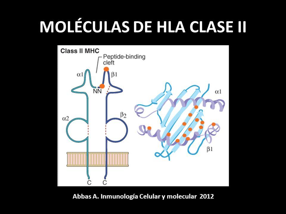 MOLÉCULAS DE HLA CLASE II