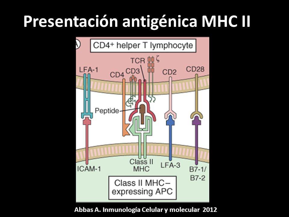 Presentación antigénica MHC II