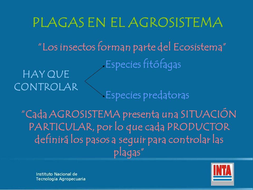 PLAGAS EN EL AGROSISTEMA Los insectos forman parte del Ecosistema