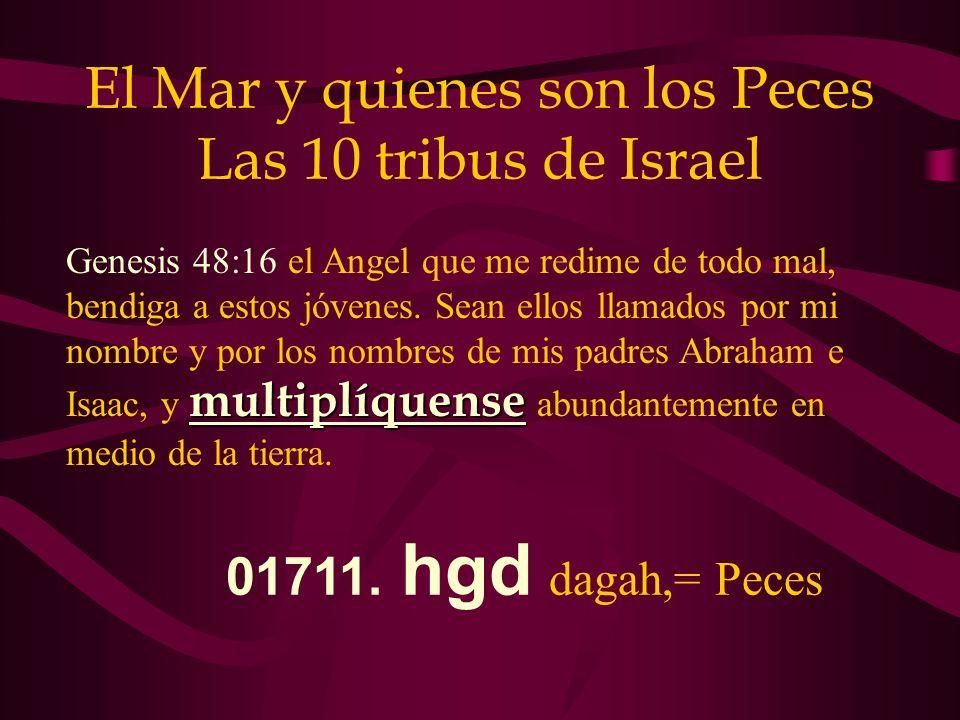 El Mar y quienes son los Peces Las 10 tribus de Israel