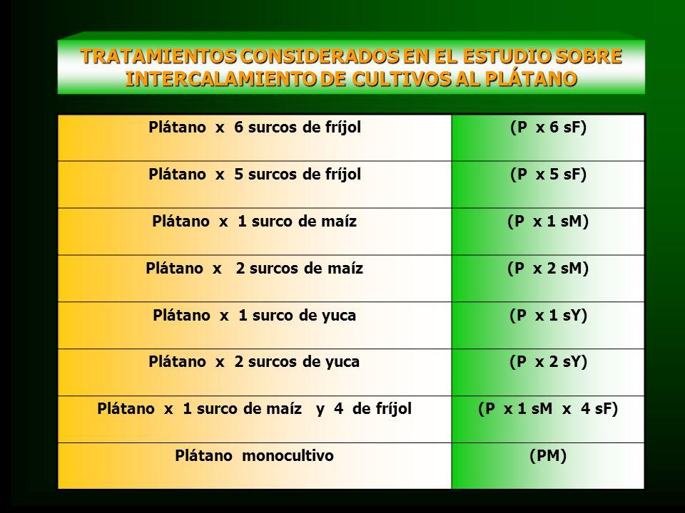TRATAMIENTOS CONSIDERADOS EN EL ESTUDIO SOBRE INTERCALAMIENTO DE CULTIVOS AL PLÁTANO