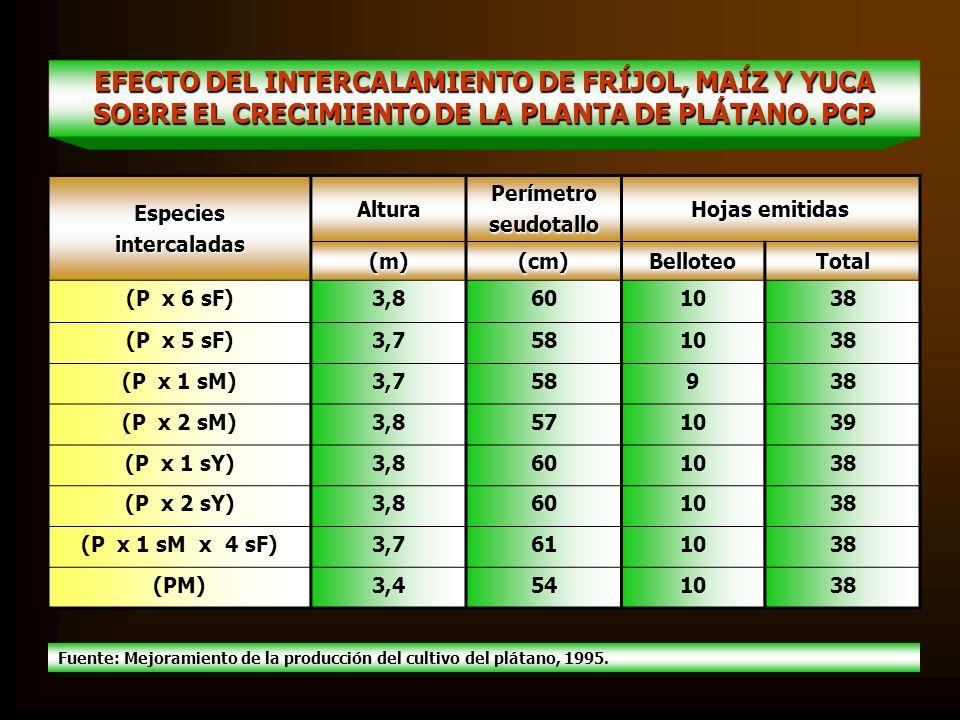 EFECTO DEL INTERCALAMIENTO DE FRÍJOL, MAÍZ Y YUCA SOBRE EL CRECIMIENTO DE LA PLANTA DE PLÁTANO. PCP