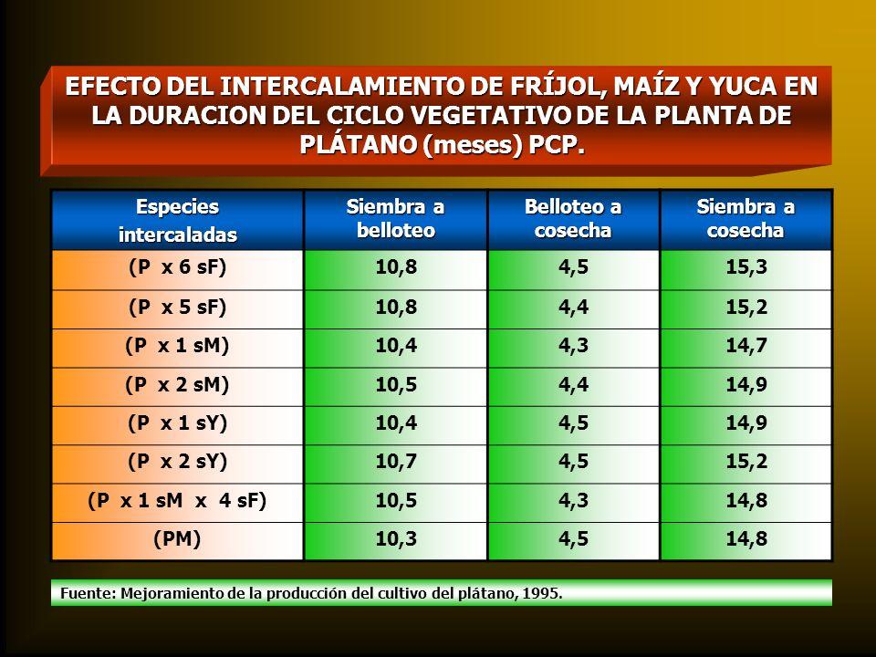EFECTO DEL INTERCALAMIENTO DE FRÍJOL, MAÍZ Y YUCA EN LA DURACION DEL CICLO VEGETATIVO DE LA PLANTA DE PLÁTANO (meses) PCP.