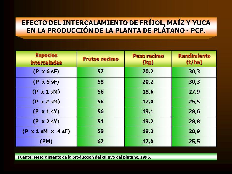 EFECTO DEL INTERCALAMIENTO DE FRÍJOL, MAÍZ Y YUCA EN LA PRODUCCIÓN DE LA PLANTA DE PLÁTANO - PCP.