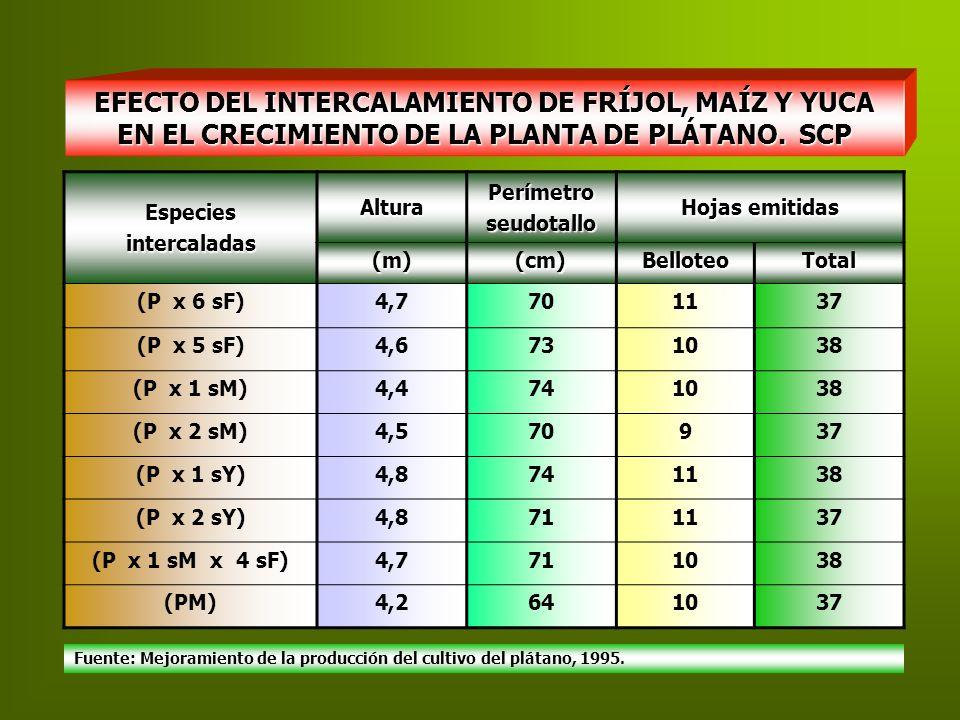 EFECTO DEL INTERCALAMIENTO DE FRÍJOL, MAÍZ Y YUCA EN EL CRECIMIENTO DE LA PLANTA DE PLÁTANO. SCP