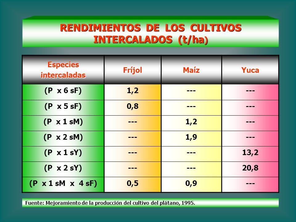 RENDIMIENTOS DE LOS CULTIVOS INTERCALADOS (t/ha)