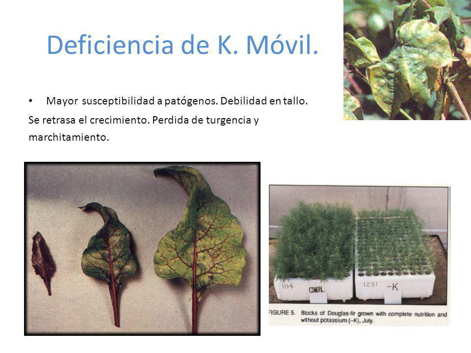 Deficiencia de K. Móvil. Mayor susceptibilidad a patógenos. Debilidad en tallo. Se retrasa el crecimiento. Perdida de turgencia y.