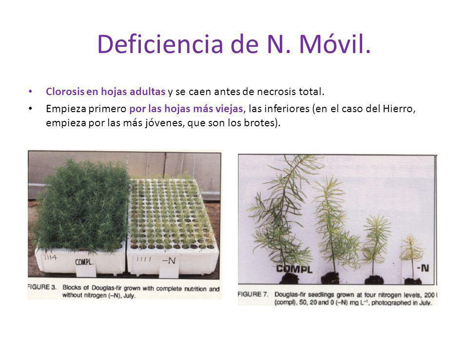 Deficiencia de N. Móvil. Clorosis en hojas adultas y se caen antes de necrosis total.