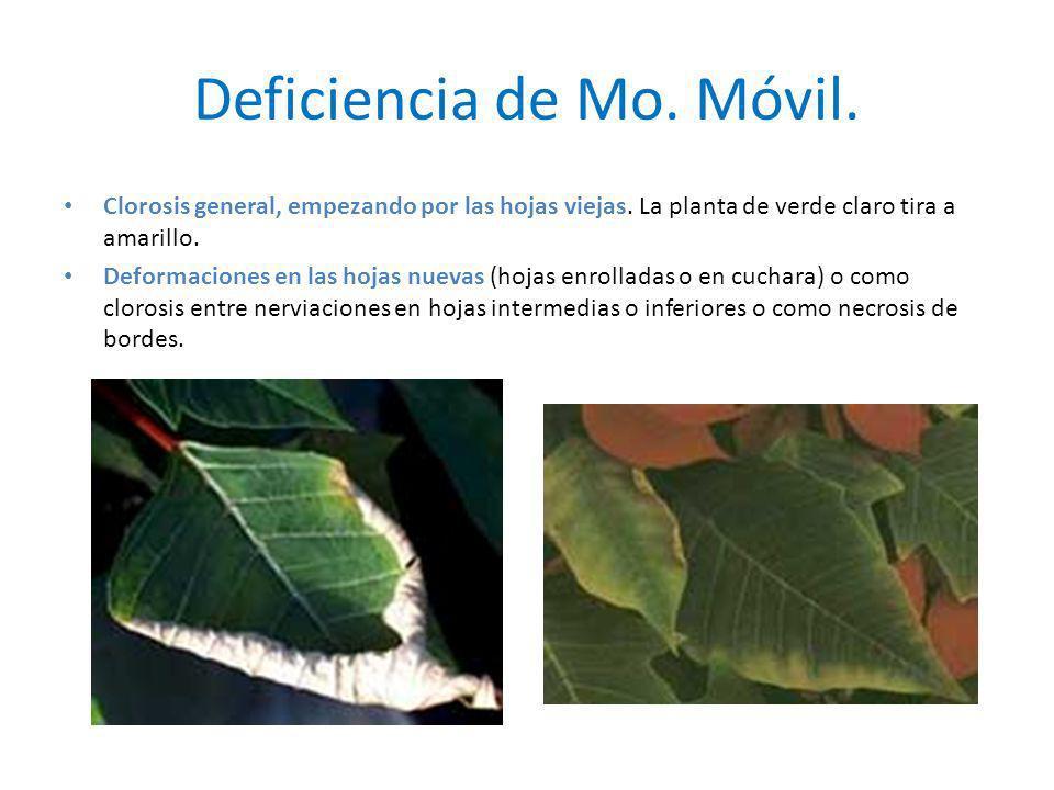 Deficiencia de Mo. Móvil.