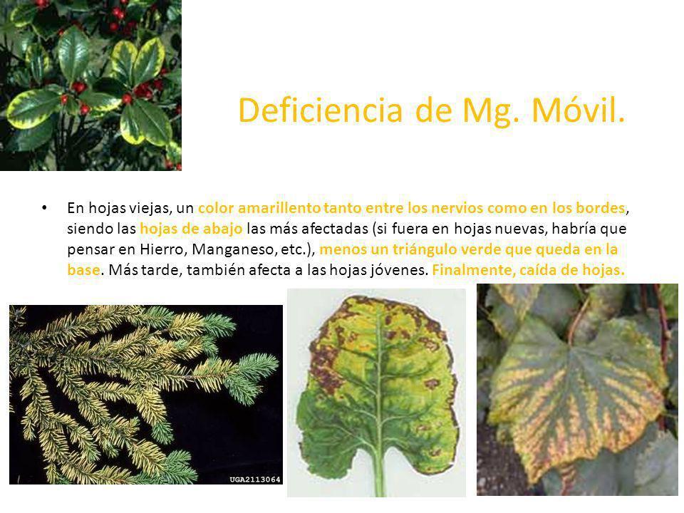 Deficiencia de Mg. Móvil.