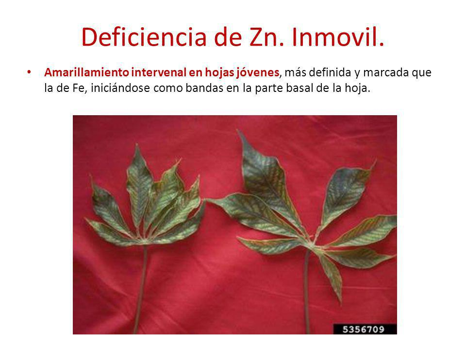 Deficiencia de Zn. Inmovil.