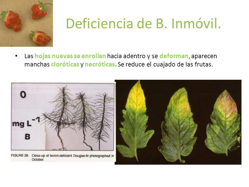 Deficiencia de B. Inmóvil.