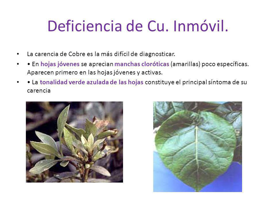 Deficiencia de Cu. Inmóvil.