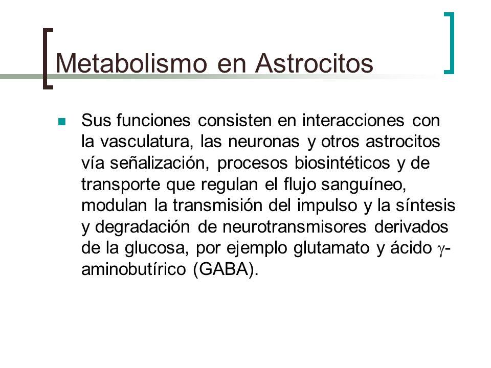 Metabolismo en Astrocitos