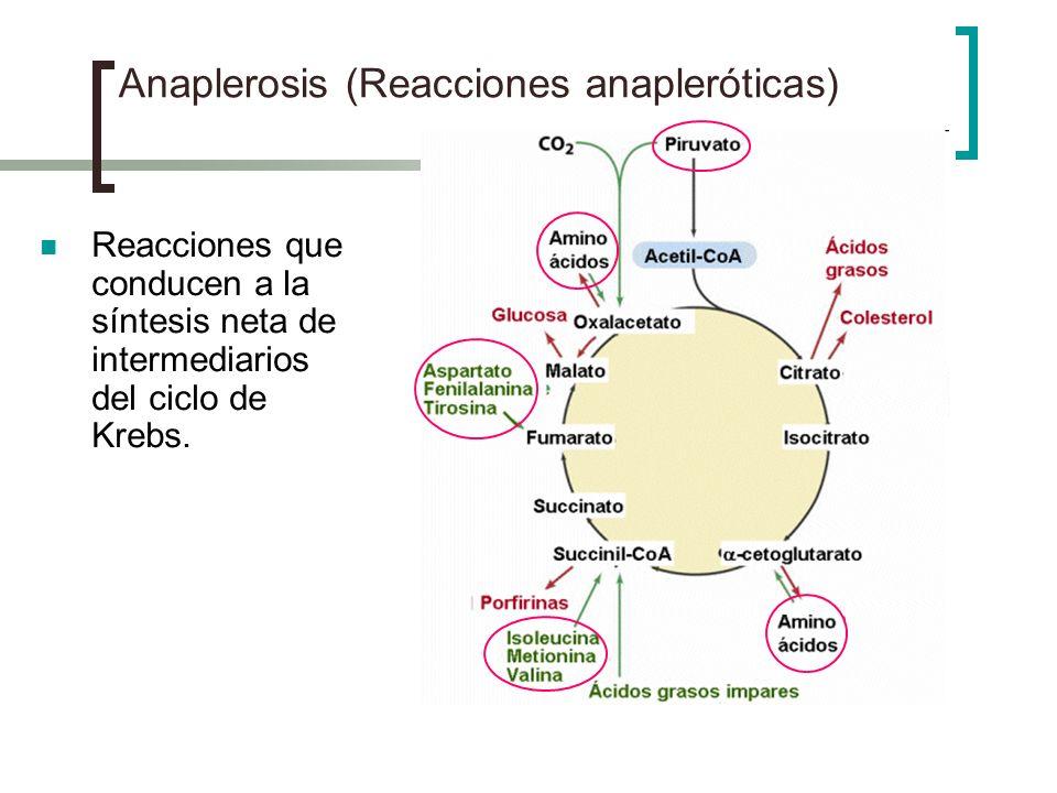 Anaplerosis (Reacciones anapleróticas)