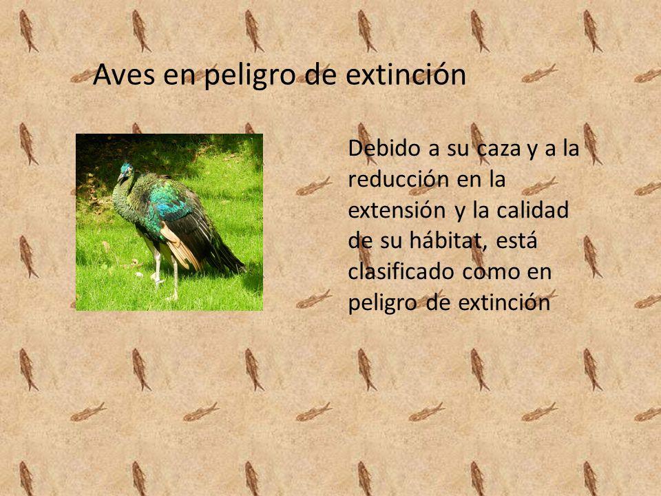 Aves en peligro de extinción