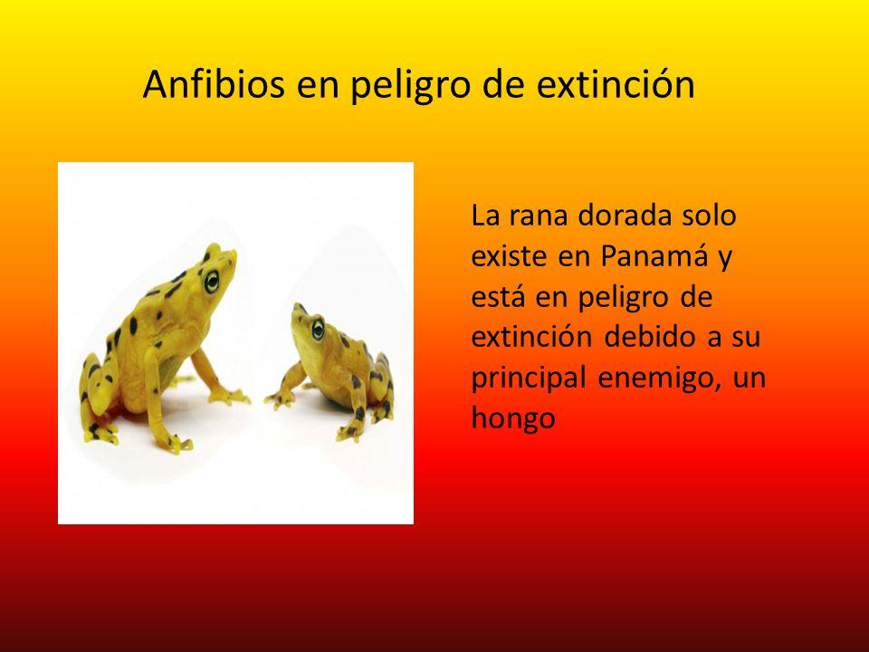 Anfibios en peligro de extinción