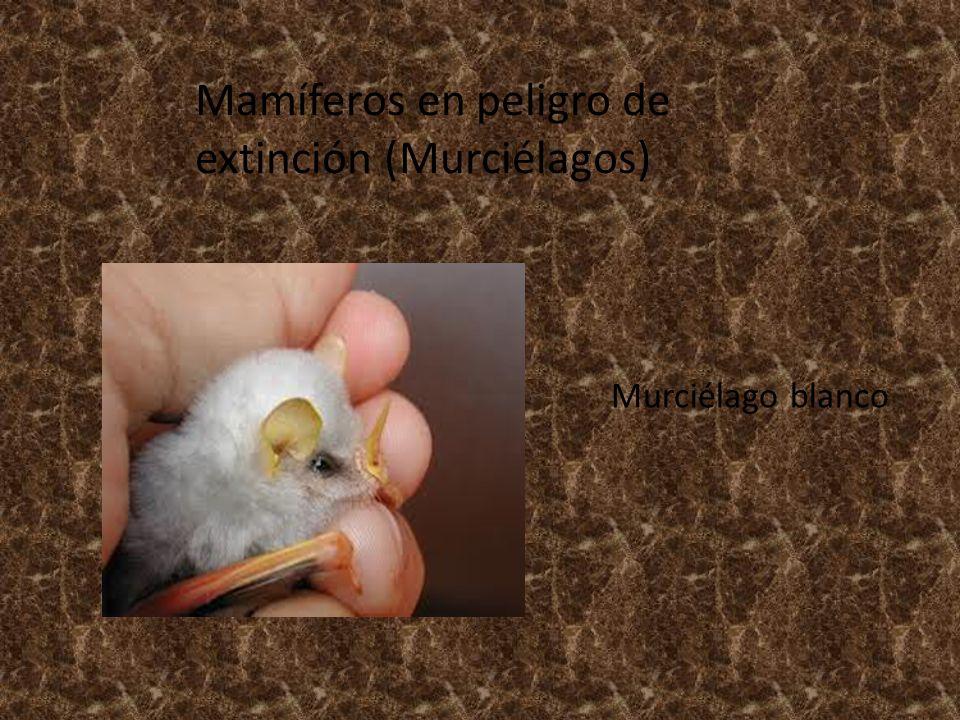 Mamíferos en peligro de extinción (Murciélagos)