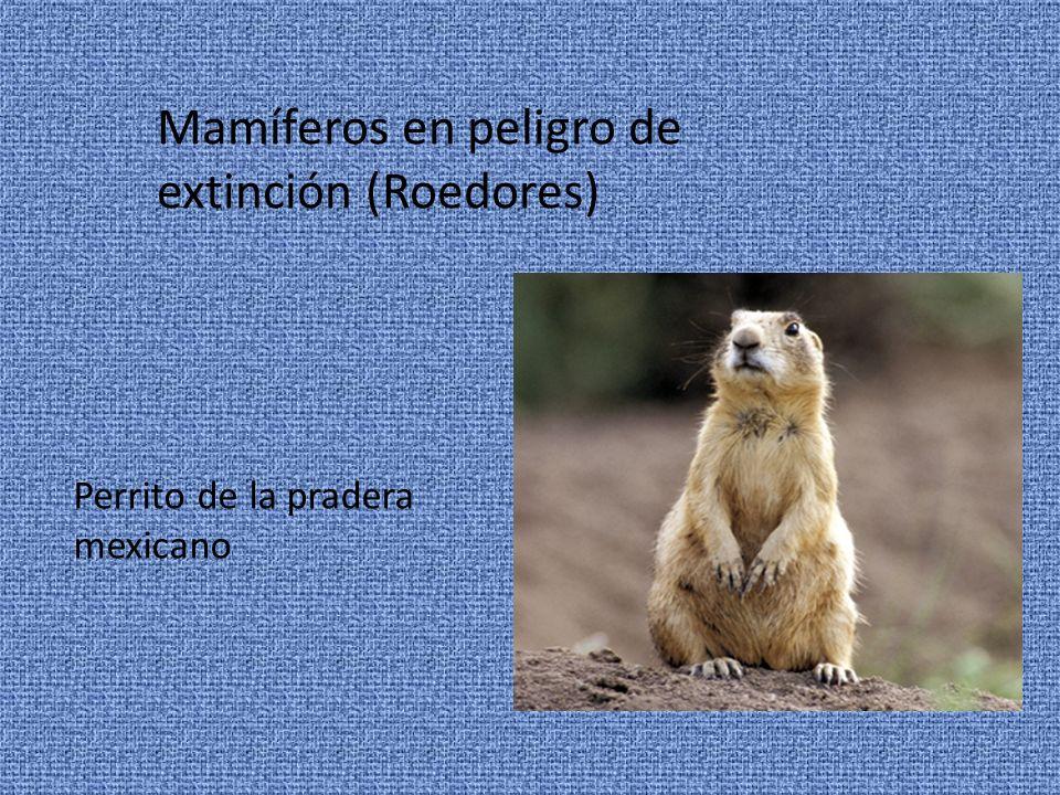 Mamíferos en peligro de extinción (Roedores)