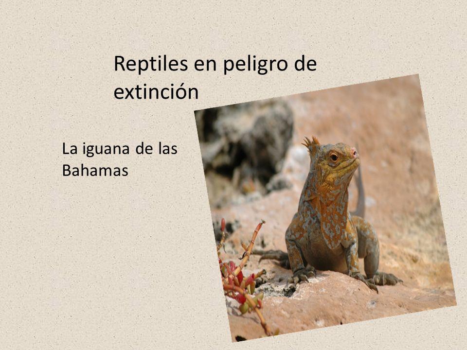 Reptiles en peligro de extinción