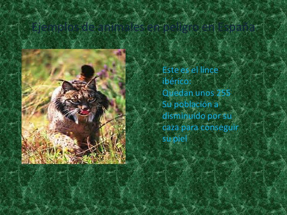 Ejemplos de animales en peligro en España