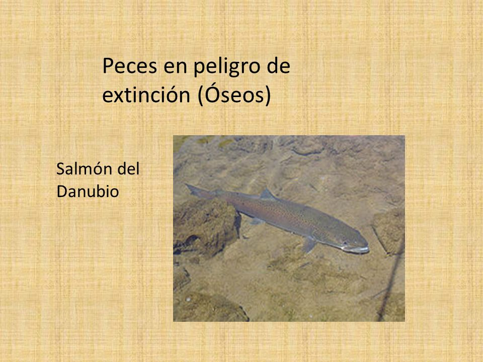 Peces en peligro de extinción (Óseos)