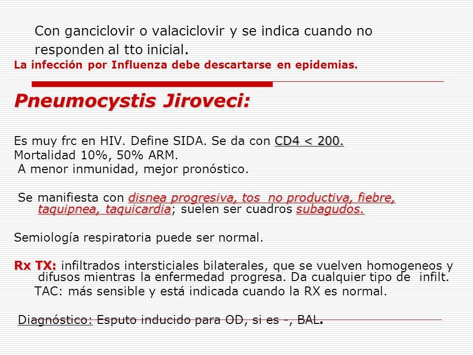 Pneumocystis Jiroveci: