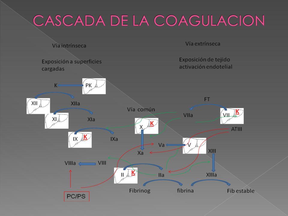 CASCADA DE LA COAGULACION