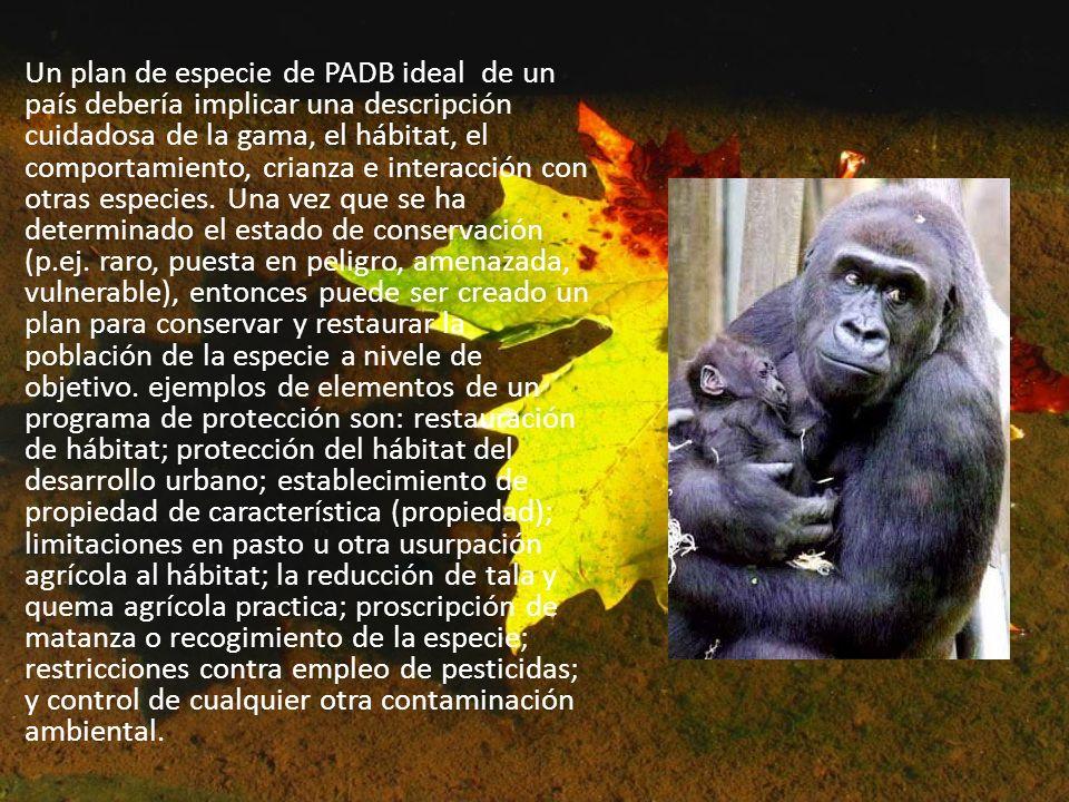 Un plan de especie de PADB ideal de un país debería implicar una descripción cuidadosa de la gama, el hábitat, el comportamiento, crianza e interacción con otras especies.
