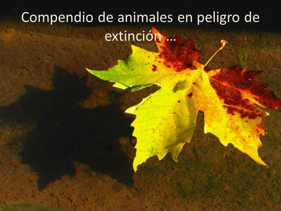 Compendio de animales en peligro de extinción …