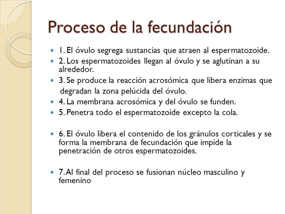 Proceso de la fecundación