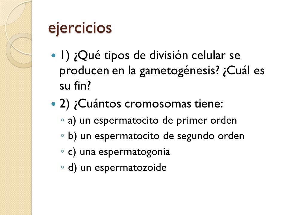 ejercicios 1) ¿Qué tipos de división celular se producen en la gametogénesis ¿Cuál es su fin 2) ¿Cuántos cromosomas tiene: