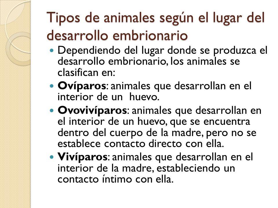 Tipos de animales según el lugar del desarrollo embrionario