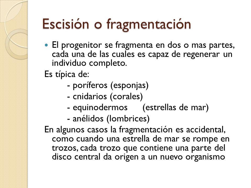 Escisión o fragmentación