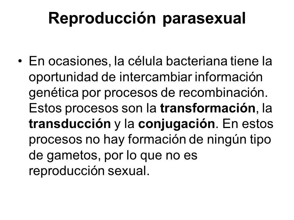 Reproducción parasexual
