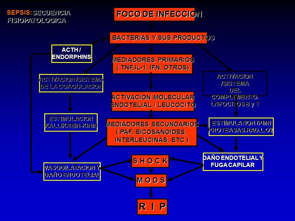 ENDOTELIAL / LEUCOCITO MEDIADORES SECUNDARIOS