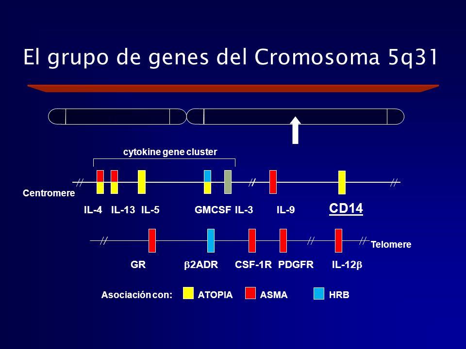 El grupo de genes del Cromosoma 5q31