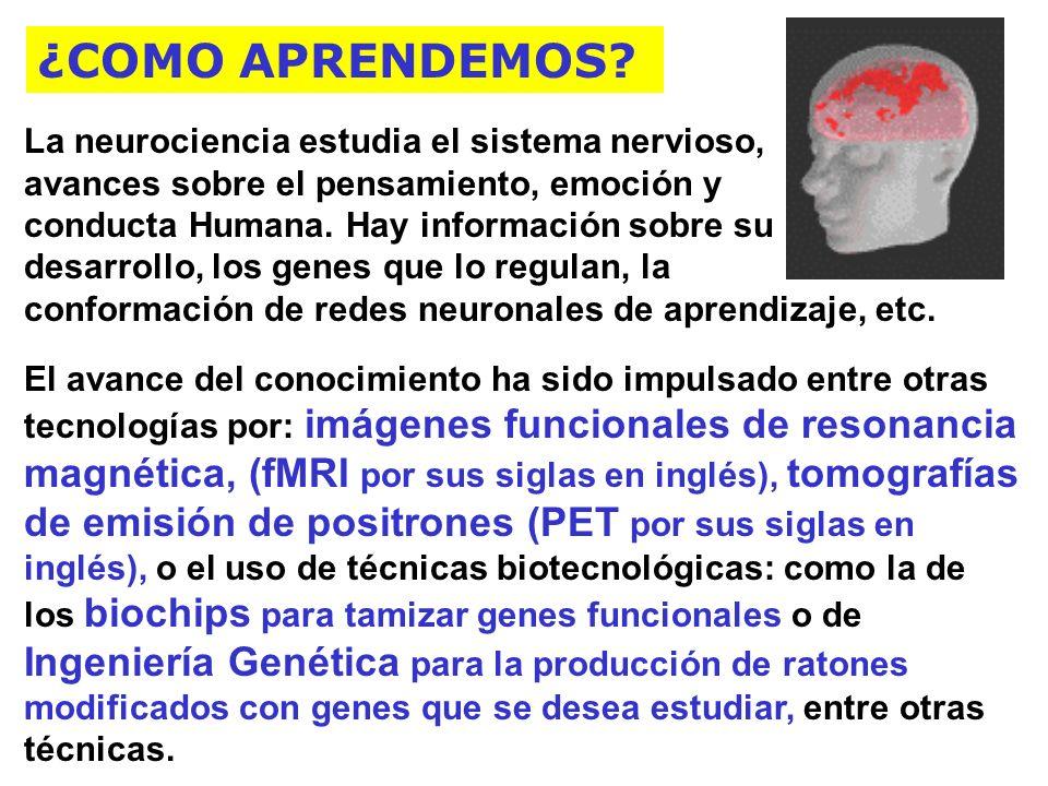 ¿COMO APRENDEMOS La neurociencia estudia el sistema nervioso,
