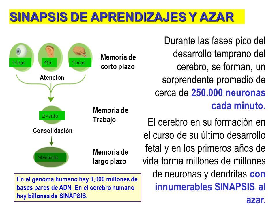 SINAPSIS DE APRENDIZAJES Y AZAR