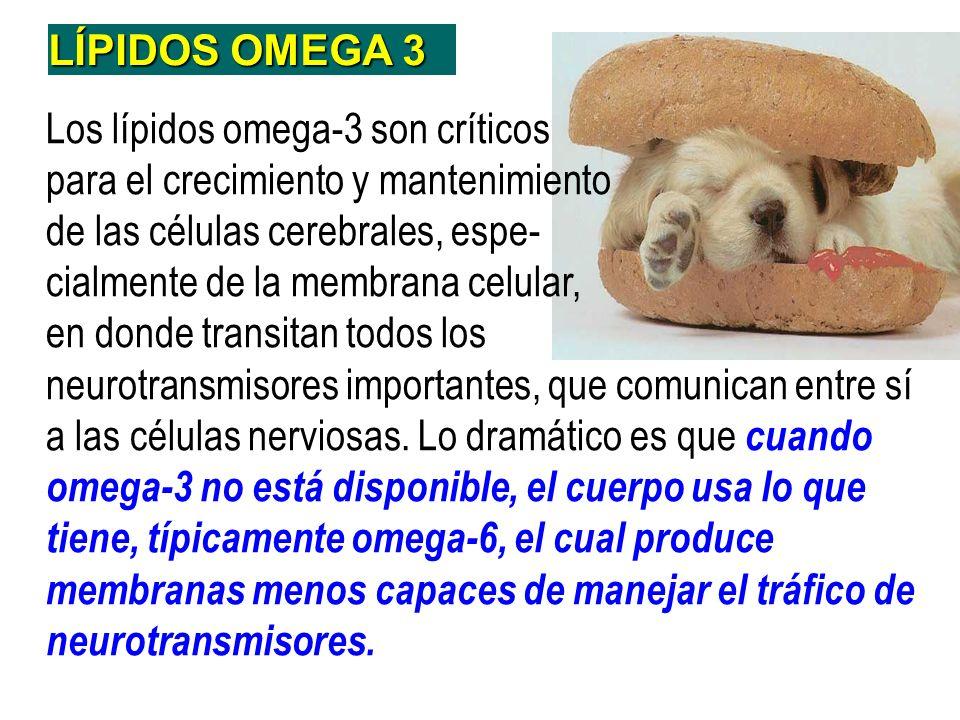 LÍPIDOS OMEGA 3Los lípidos omega-3 son críticos. para el crecimiento y mantenimiento. de las células cerebrales, espe-
