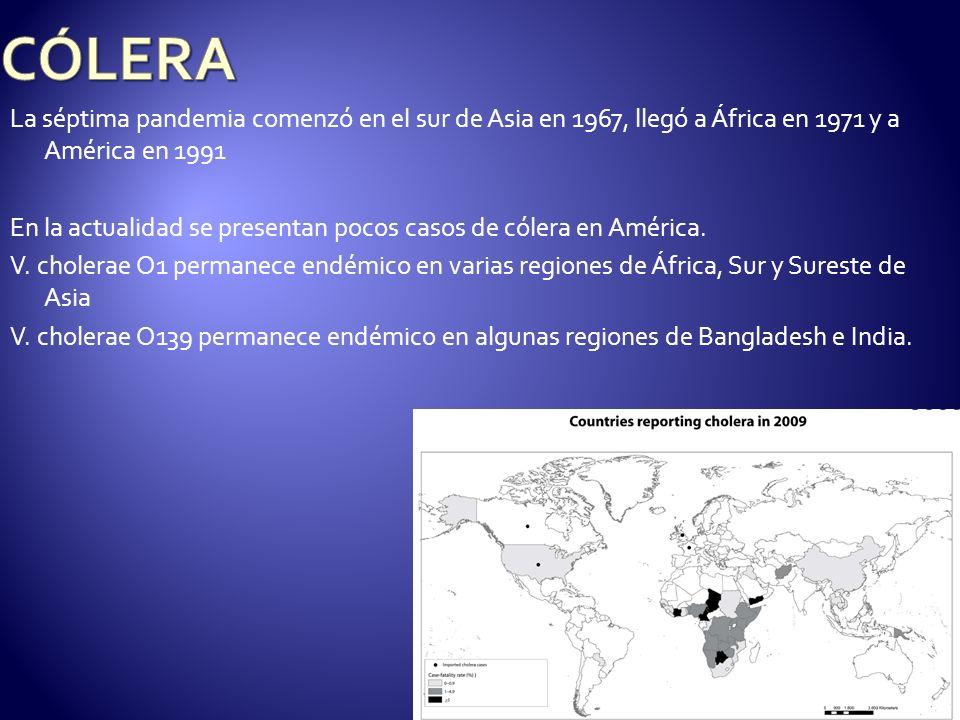 CÓLERALa séptima pandemia comenzó en el sur de Asia en 1967, llegó a África en 1971 y a América en 1991.