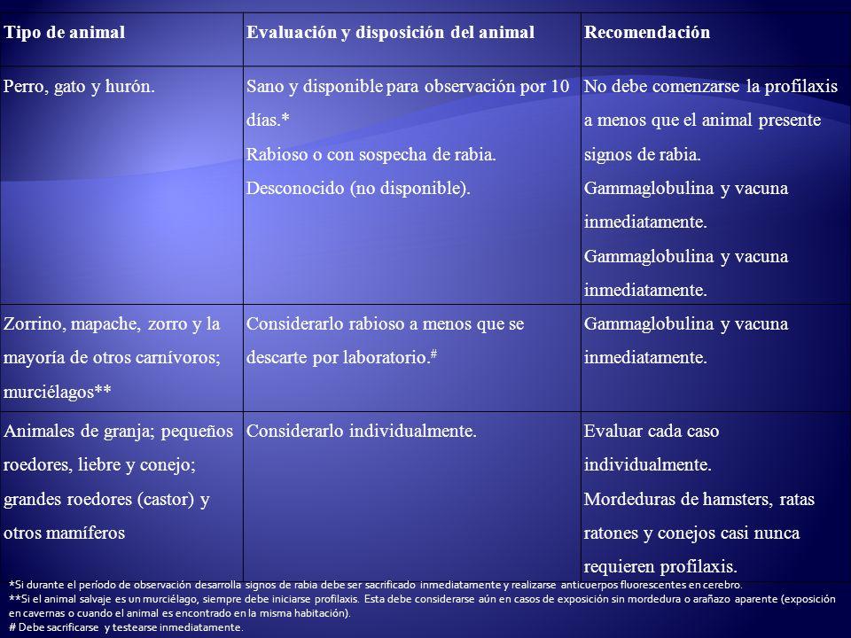 Evaluación y disposición del animal Recomendación Perro, gato y hurón.