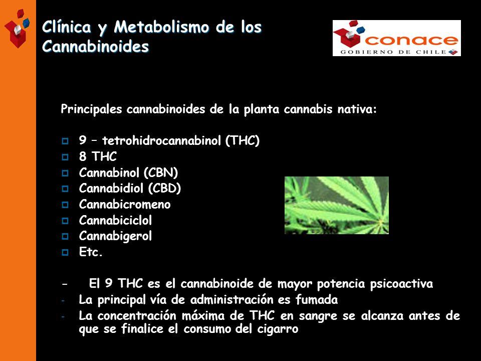 Clínica y Metabolismo de los Cannabinoides