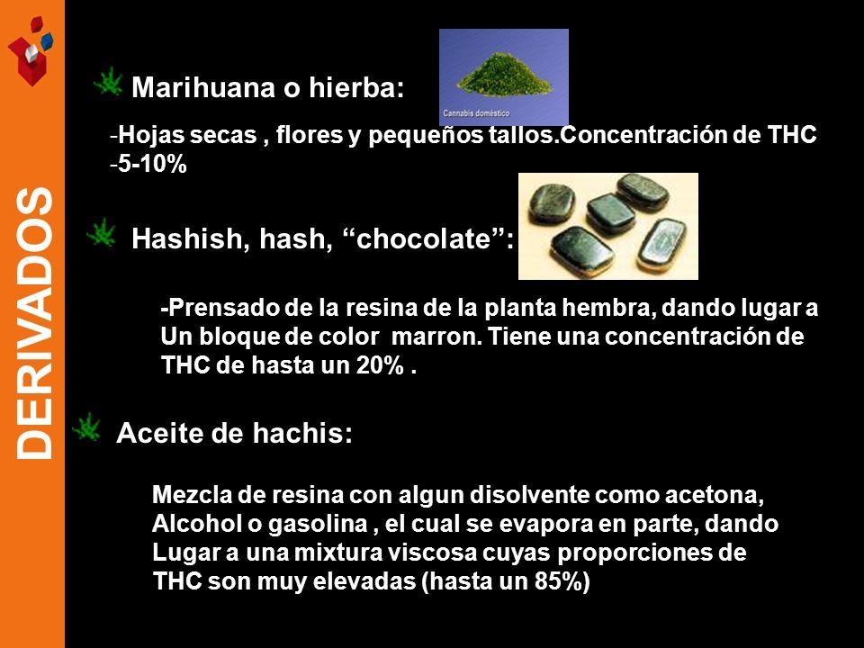 DERIVADOS Marihuana o hierba: Hashish, hash, chocolate :