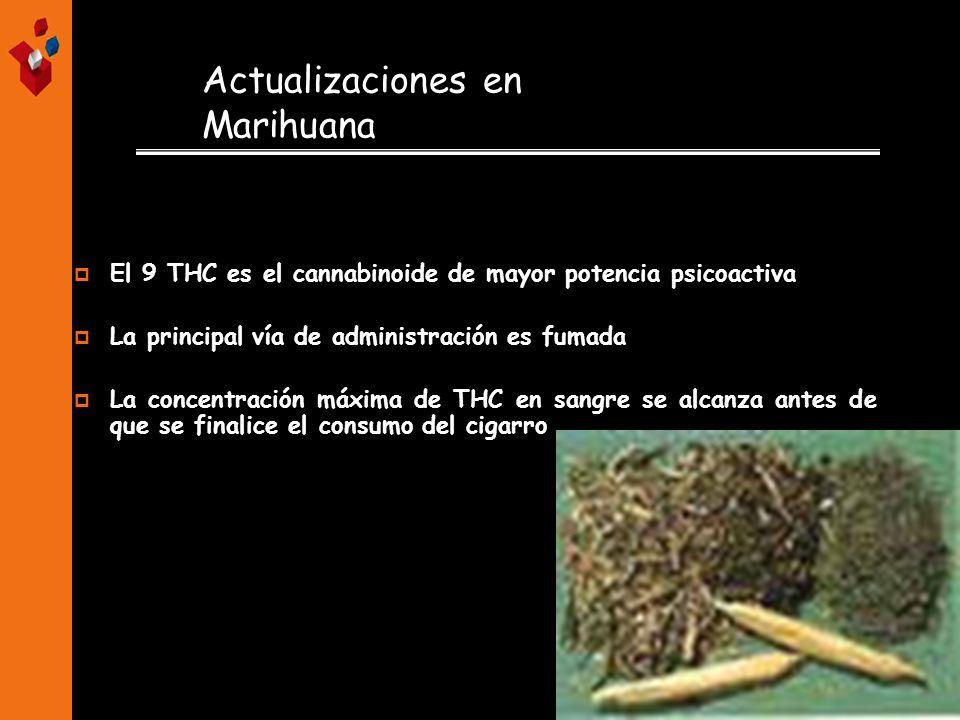 Actualizaciones en Marihuana