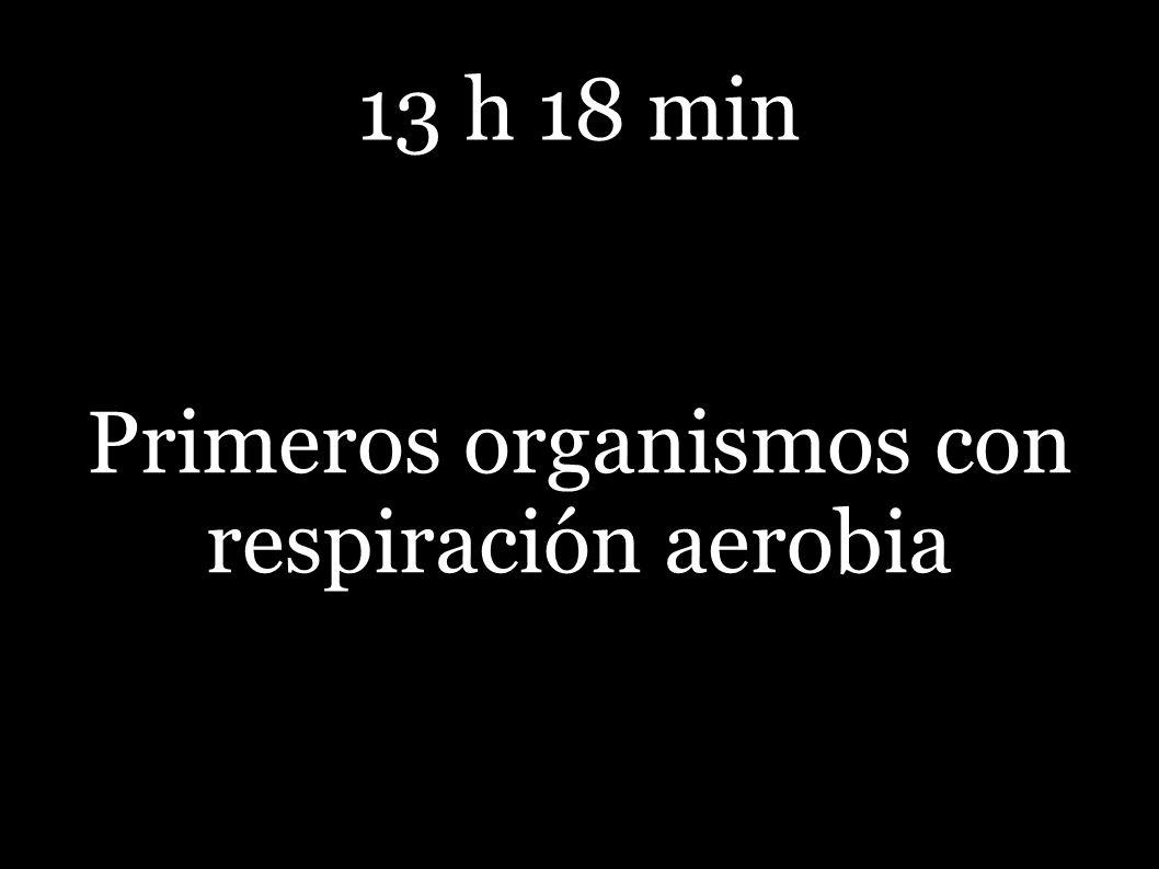 Primeros organismos con respiración aerobia