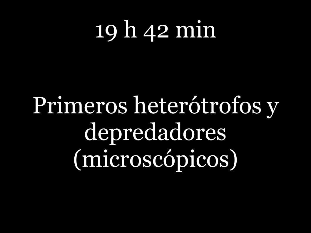 Primeros heterótrofos y depredadores (microscópicos)
