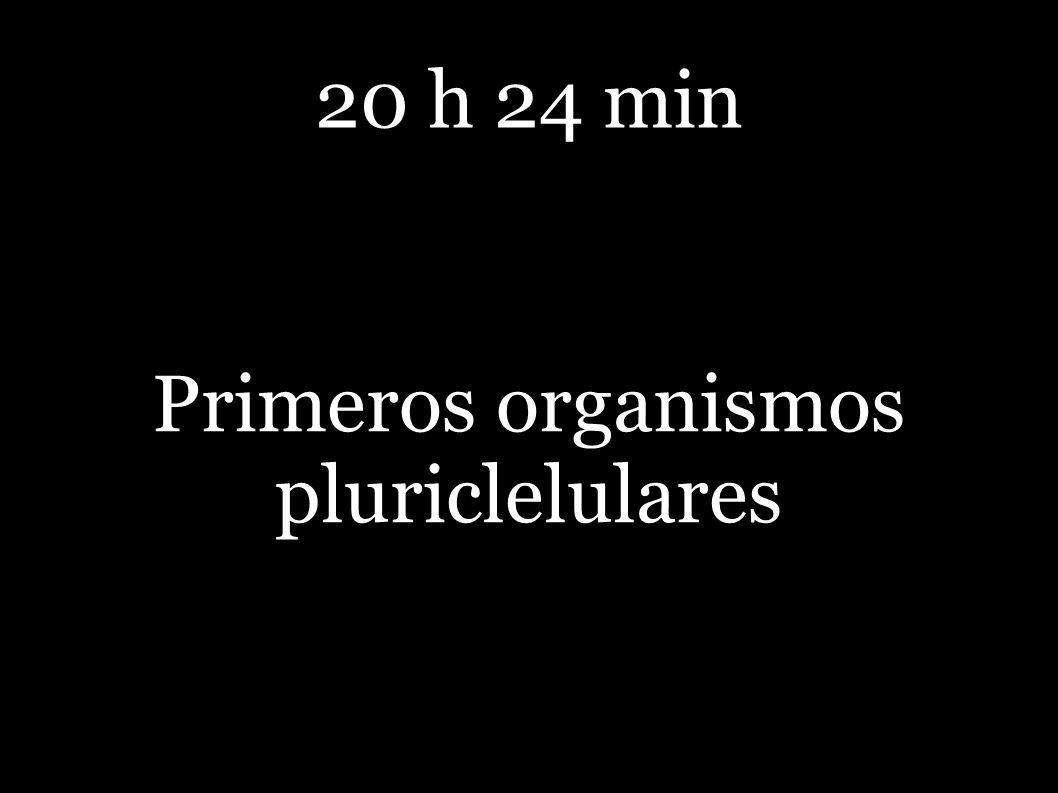 Primeros organismos pluriclelulares